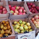 Kenilworth Farmers Market opens this Tuesday