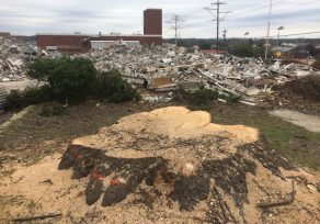 County accelerating sale of fire station, says already-felled trees should not be cut
