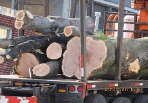 Residents outraged as county clears 30 trees at old fire station