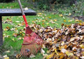 Be green; leave your leaves