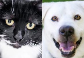 Pets of the Week: Boots and Bojangles